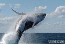 Массовые самоубийства китов2
